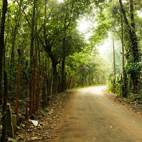 Forest  road by Rajesh Loganathan - Backgrounds Nature ( fence, green, dark, trees, bush, forest, road )