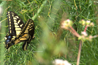 Photo: Butterfly