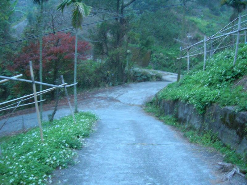 Photo: 慶福里五窯坑,向下坡看