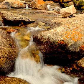 precious! by Abhishek Majumdar - Nature Up Close Water