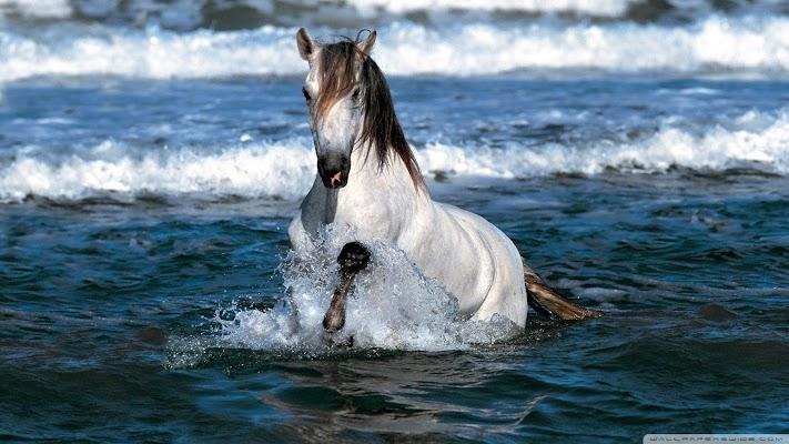 Horse Wallpapers - screenshot