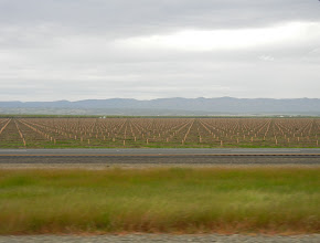 Photo: Agriculture views off of I-5 in SoCal