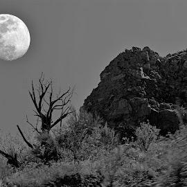 by Will McNamee - Black & White Landscapes ( patty_j_ball@hotmail.com; donaldbarber11@msn.com; donaldbarber11@msn.com; d3a1@aol.com;  postholes2002@yahoo.com; )