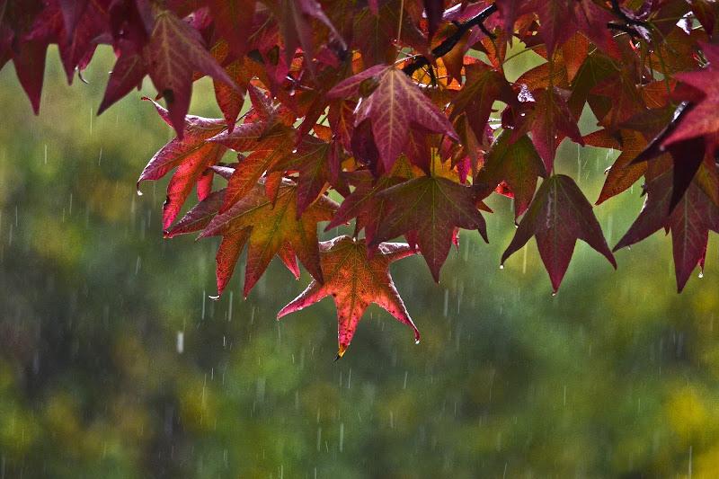 Pioggia autunnale di giuseppedangelo