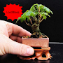 New Mini Bonsai APK icon