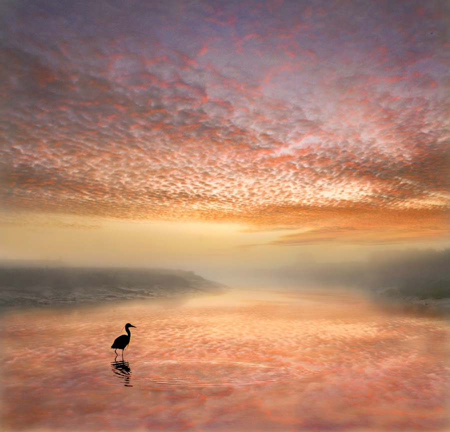Reflecting the Embers by Adrian Campfield - Landscapes Waterscapes ( clouds, water, herons, reflections, birds, sky, dawn, fog, weather, wet, sunrise, sadows, mist,  )