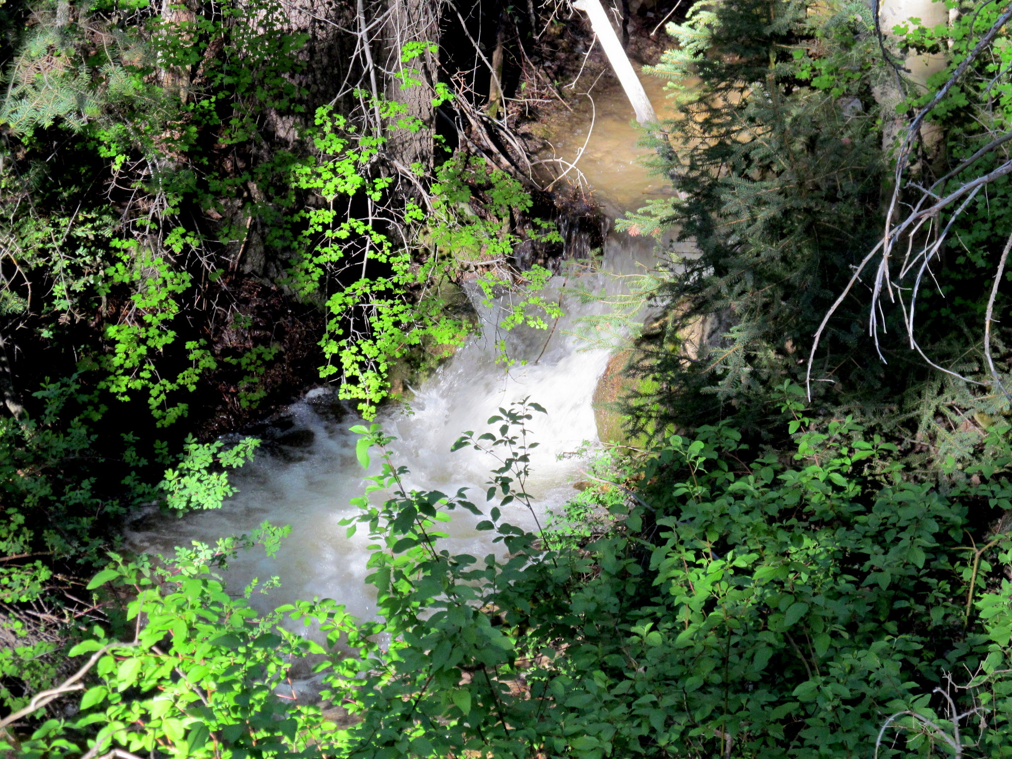 Photo: Mill Fork Canyon stream