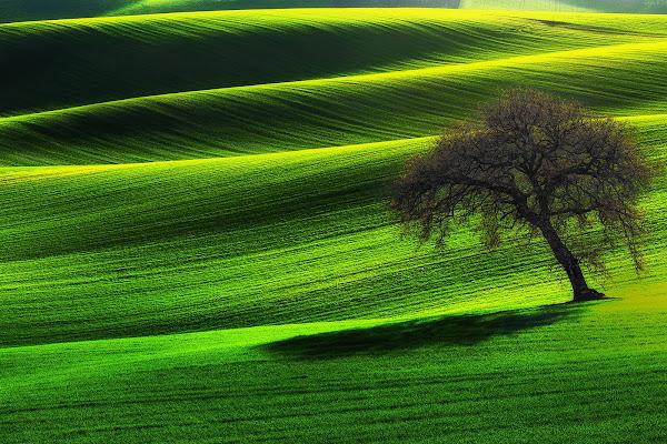 Velluto verde di prometeo