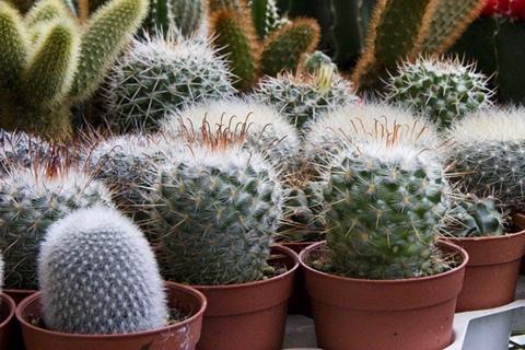 室內植物裝飾手機