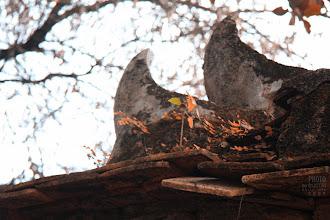 Photo: Mái cổ