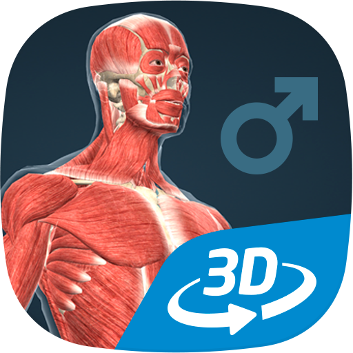 Human body (male) educational VR 3D file APK for Gaming PC/PS3/PS4 Smart TV