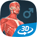 Human body (male) educational VR 3D download