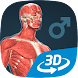 Human body (male) educational VR 3D