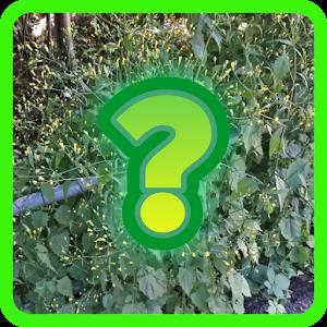 essbare Pflanze mit spanischem Namen