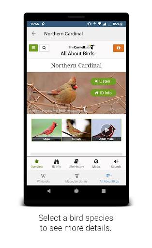 BirdNET screenshot 4