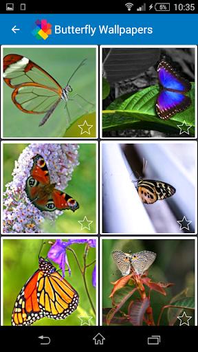 나비 배경 화면