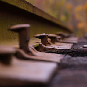 Riding the Rails by Beth Phifer - Artistic Objects Other Objects ( spikes, rails, railroad, train, tracks, transportation, rust )