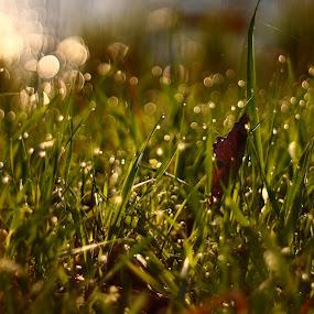 by János Farkas - Nature Up Close Leaves & Grasses