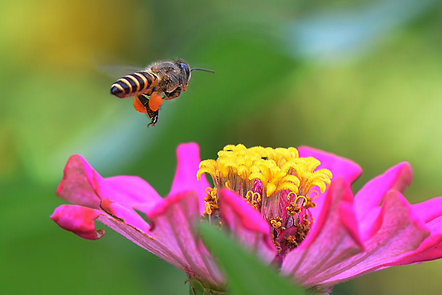 Approaching you by Eva Prathama - Animals Insects & Spiders
