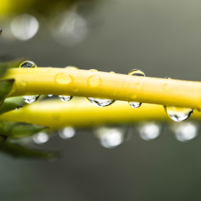 Droplets by Maverick De Castro - Nature Up Close Water