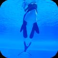Orca Killer Whale Video Wallpaper APK