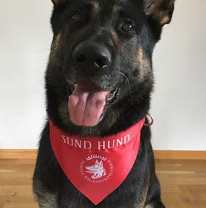 Scarf röd Sund med Hund (5 st scarf med diplom/förp)