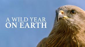 A Wild Year On Earth thumbnail