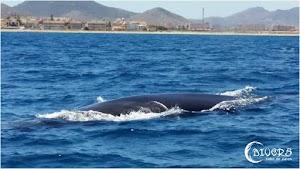 Crónica Divers Cabo de Palos