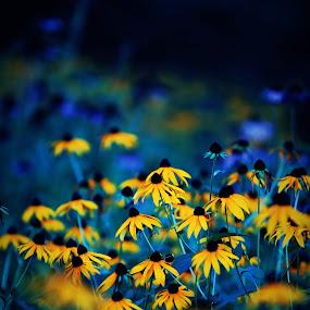 .... by Daniel Gaudin - Flowers Flower Gardens ( nature, colors, outdoor, plants, flowers,  )