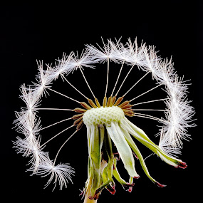 Halo by Dave Hudson - Nature Up Close Flowers - 2011-2013 (  )