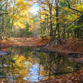 Pond in the forest by Sandy Davis DePina - Landscapes Waterscapes ( autumn leaves, autumn, foliage, fall, pond )