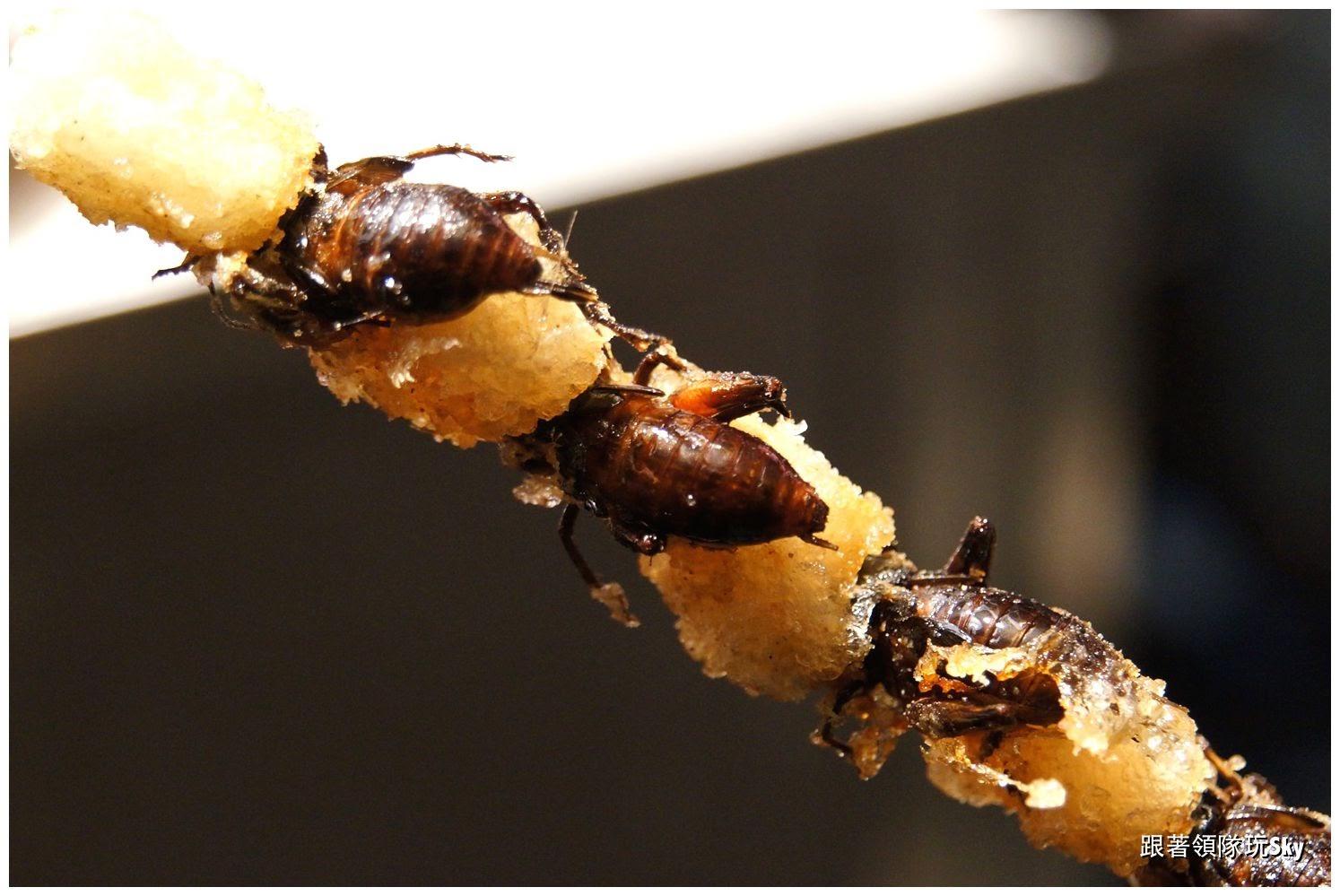 台南美食推薦【蟋世珍寶炸蟋蟀】高鈣、高蛋白的炸蟋蟀.花園夜市