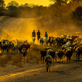 by Joggie van Staden - Animals Other ( sunset, dust )