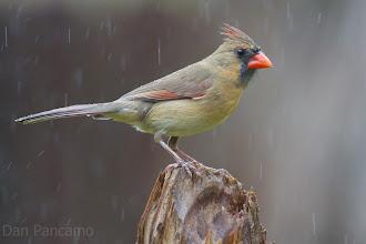 Photo: I Dream of Rain