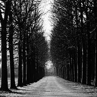 Viale di alberi spogli di