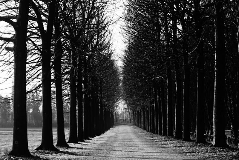 Viale di alberi spogli di patsie_1506