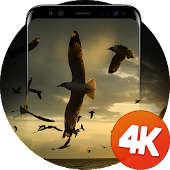 Birds Wallpapers 4K Android APK Download Free By Ultra Wallpapers