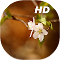 Cherry Blossom Live Wallpapers HD icon