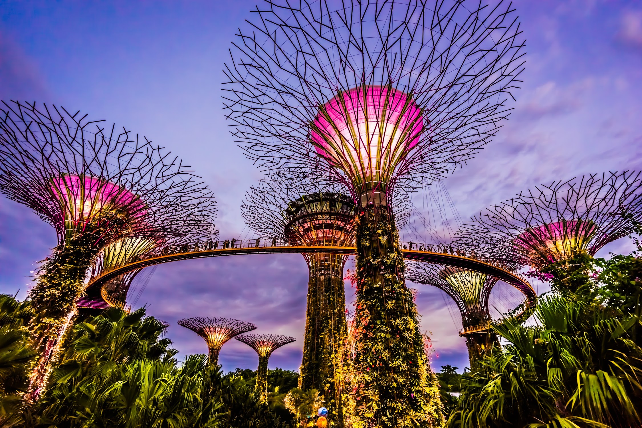 Gardens by the Bay evening view3