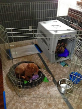 Photo: At her new home, they were all set up for her