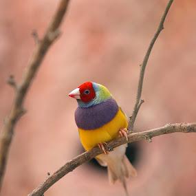 by Patrick Simon - Animals Birds