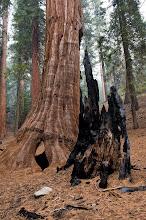 Photo: Sequoia Kings, Fuels