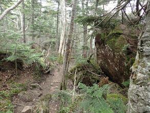樹林帯へ入る