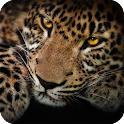 Jaguar Animal Live Wallpaper icon