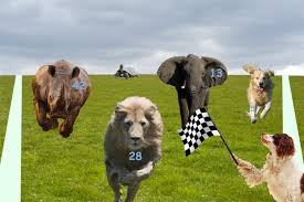 Image result for animal race