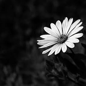 lonely by Damir Ipavec - Nature Up Close Flowers - 2011-2013 ( lonely )