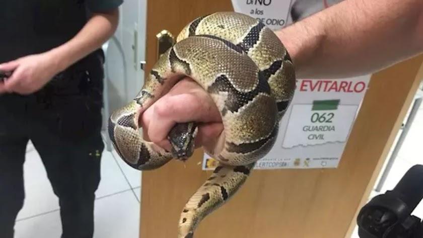 Imagen de una de las serpientes.