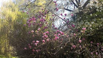 Photo: F4230640 w Ogrodzie Botanicznym