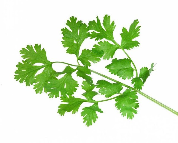 Cilantro  Description***Bright-green stems and leaves from the coriander plant. Flavor***Pungent, soapy fragrance. Uses***Very...