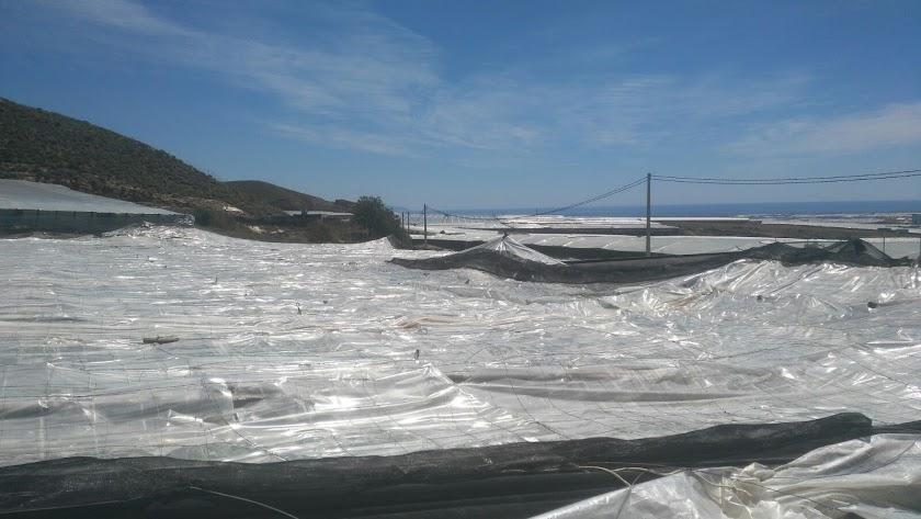 Daños causados por el granizo en La Mojonera en 2018